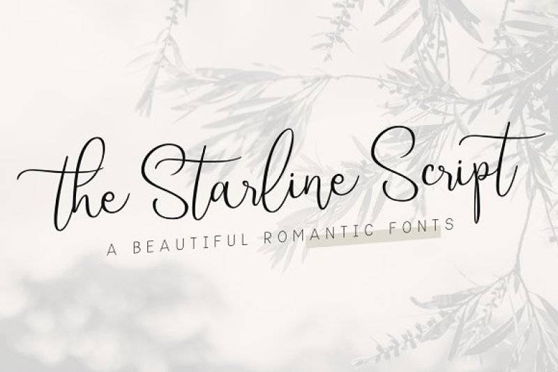 Starline Beautiful Script Fonts By Ahya Agawiss Thehungryjpeg Com