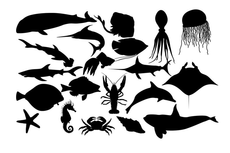 Sea Fish Silhouette Ai Eps Dxf Svg Png By Rwd Thehungryjpegcom