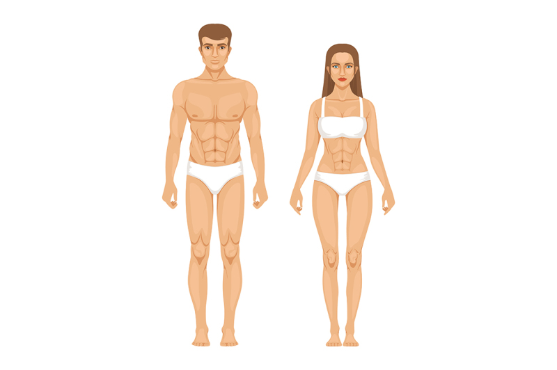 man body parts - 800×532
