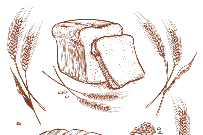 Bunch Of Wheat Ears And Bread Hand Drawn Vector Illustration In