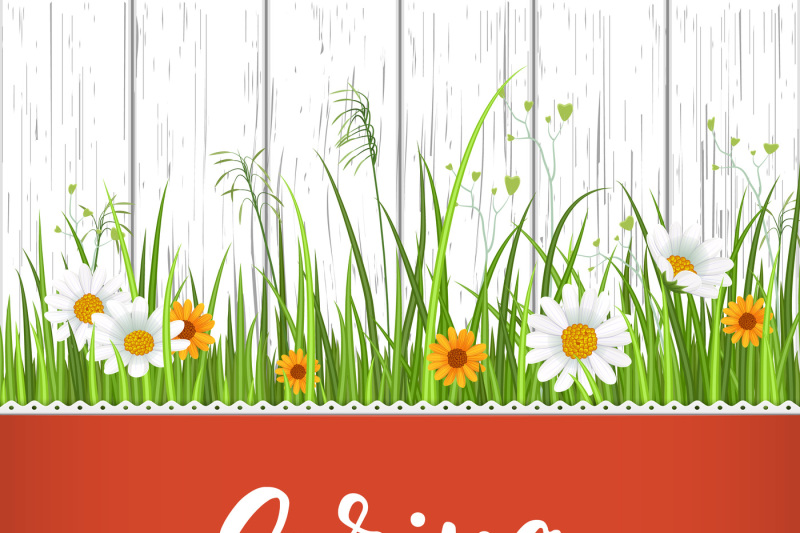 Spring Banner With Blooming Chamomile Flower And Green Grass By