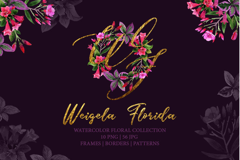 Weigela Florida Watercolor Png By Mystocks Thehungryjpeg Com