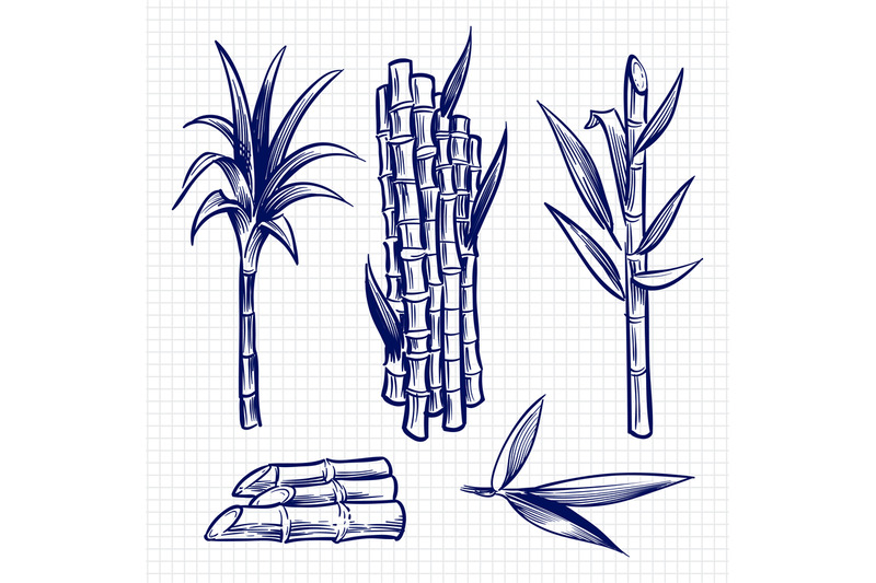 Hand Drawn Sugar Cane Set Vector Illustration By Microvector