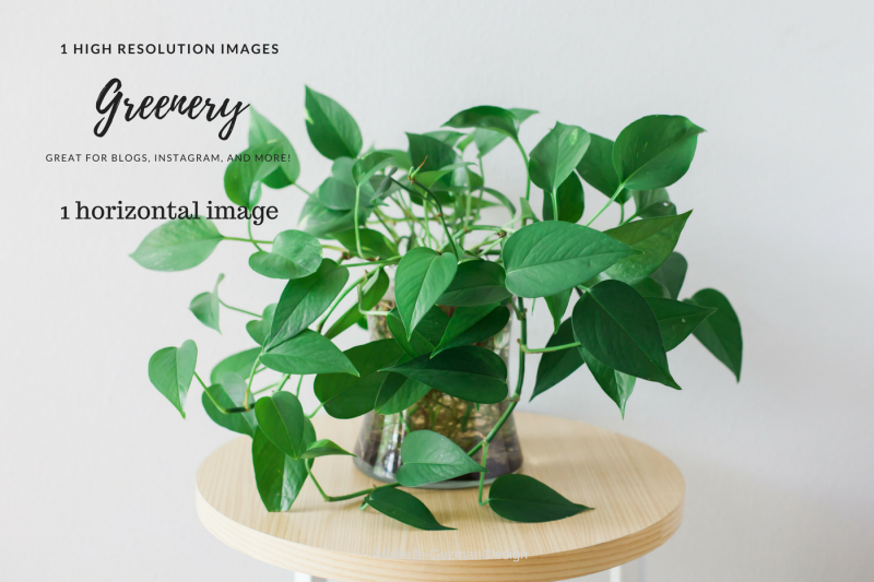Sale Greenery Plant By Michelle Guzman Design Thehungryjpeg Com