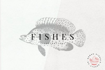 Vintage Fishes Illustrations
