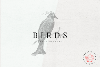 Vintage Birds Illustrations