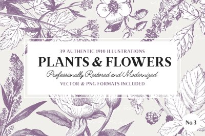39 Plant & Flower Illustrations No.3