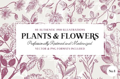 40 Flower & Plant Illustrations No.4