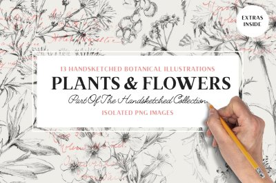 13 Botanical Illustrations & Extras