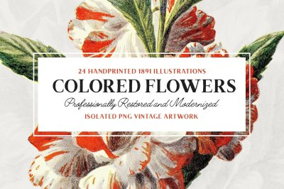 24 Colored Flower Illustrations