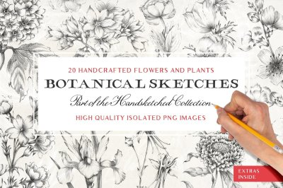 20 Sketched Flower Illustrations