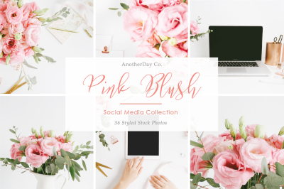 Pink Blush Styled Stock Photos