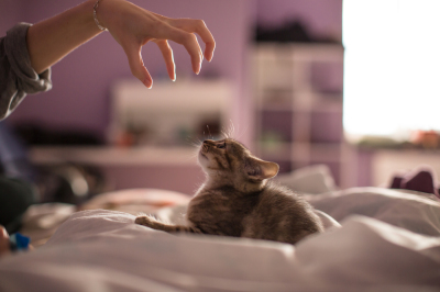 Little kitten playing with hand