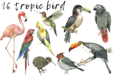 Tropic Bird watercolor collection