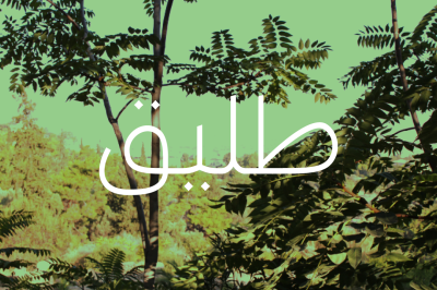 Taleeq - Arabic Typeface