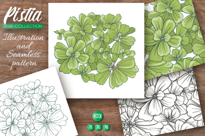 Pistia. Illustrations & Patterns