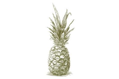 Woodcut Pineapple