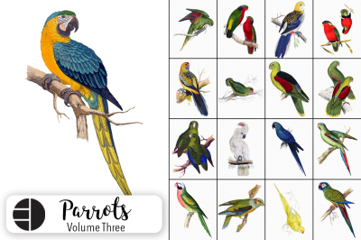 Watercolor Birds: Parrots Set 01
