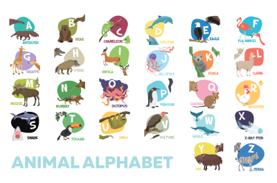 Cute color animal alphabet illustrations for kids. 26 letters vector