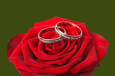 wedding rings and on a red roses