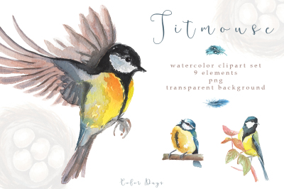Watercolor Clipart Set - Titmouse