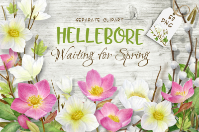 Hellebore.Waiting for spring. Watercolor clipart