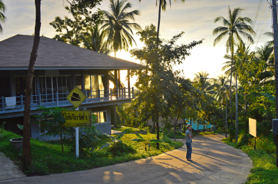 Contour of villa house, palm trees at sunset. tropical, relax jungle