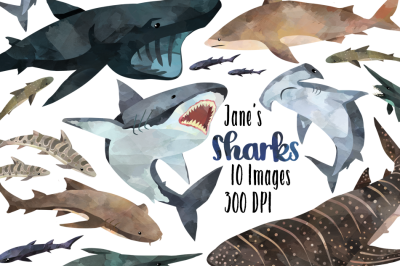 Watercolor Shark Clipart
