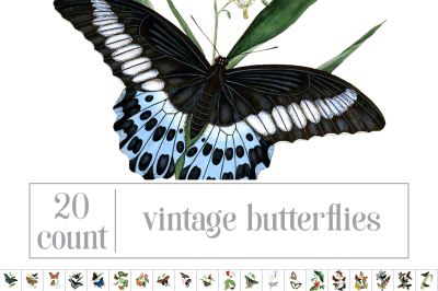 Vintage Watercolor Butterflies: Set 01