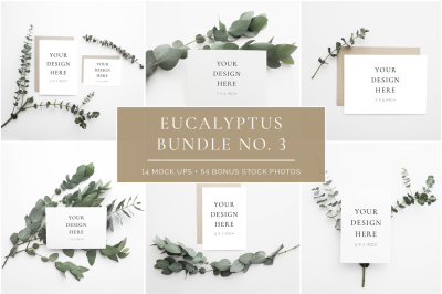Scandinavian Eucalyptus Bundle No. 3