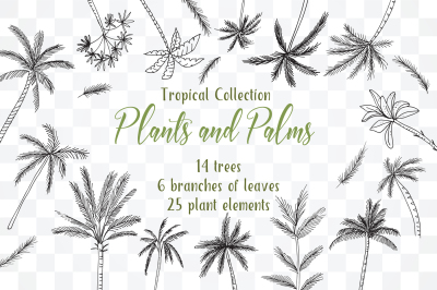 Tropical Exotic collection Tropical collection Summer Plants and Palms