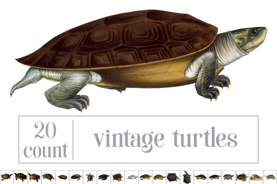 Vintage Turtles Set 01