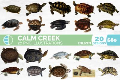 Turtle Clipart Bundle