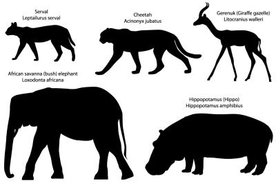 Silhouettes of animals: serval, cheetah, gerenuk, hippo, elephant
