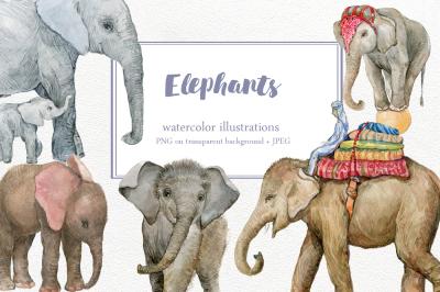 Elephants. Illustrations watercolor