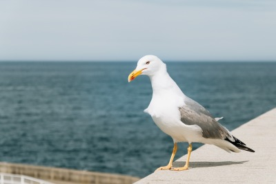 Seagull in a seaport