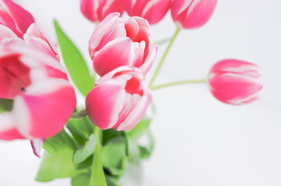 Styled stock photo. Bouquet Pink Tulips. Hero Header.