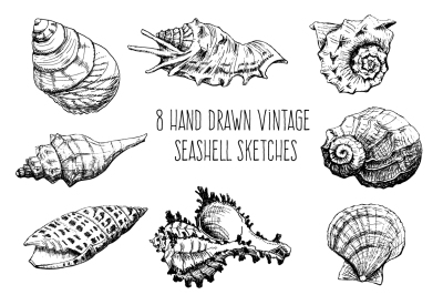 Hand Sketched Seashells Set