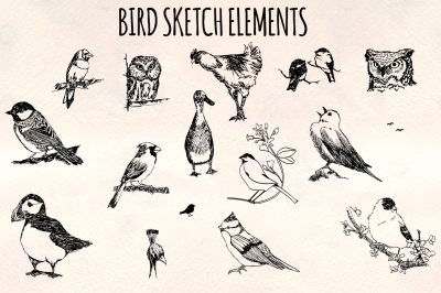 Bird Sketch Elements - 16 Ink Owls, Ducks and Songbird Illustrations - Vector Graphics Bundle!