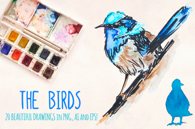 Colourful Bird Watercolor Graphics - 20+ Illustrator Elements - Vector Graphics Bundle!
