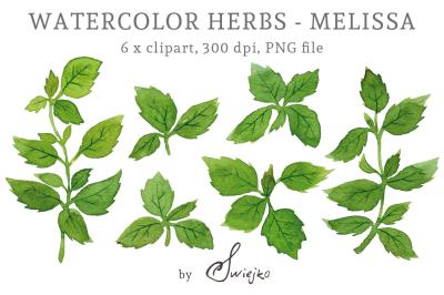 Herbs Clipart, Watercolor Leaves, Melissa, Lemon Balm