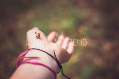 Ladybug takeoff
