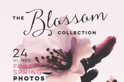 THE BLOSSOM COLLECTION