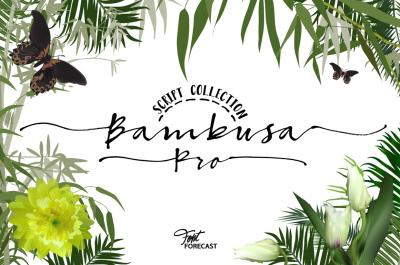 50%OFF! Bambusa Pro