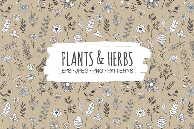 Plants & Herbs