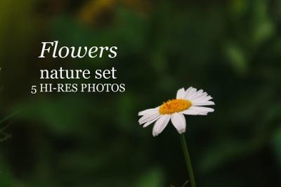 Beautiful flower set