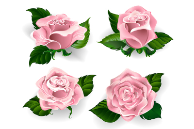 Set of Pink Roses