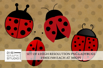 SET OF 4 LADYBUGS PNG (TRANSPARENT BACK)