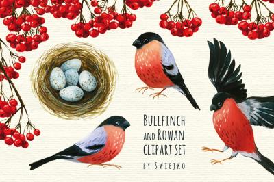 Bullfinch watercolor clipart