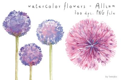 Watercolor Clipart, Watercolor Flowers, Flower Clipart, Allium